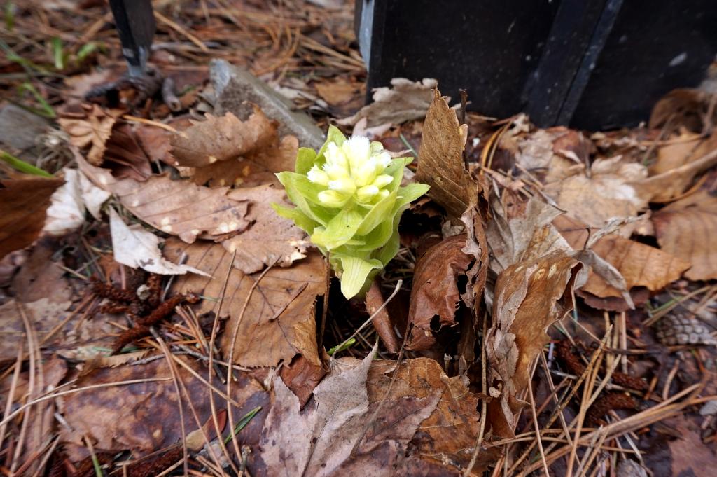 小さな春見つけました。