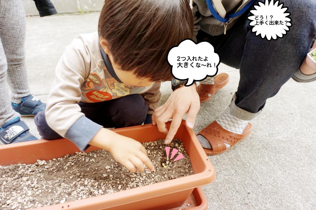 1人2粒で枝豆を植えています。