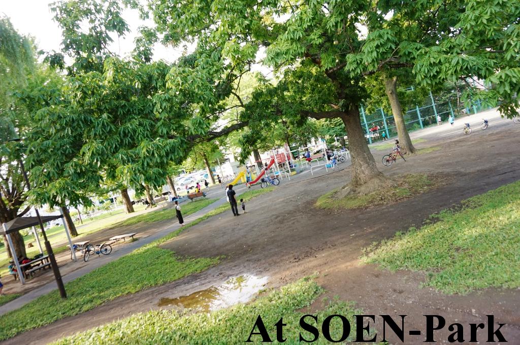 緑が多い桑園公園!