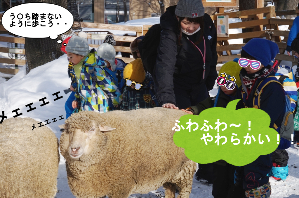 羊タッチに挑戦!もっこもこのふっわふわでした(@・ェ・@)メェ