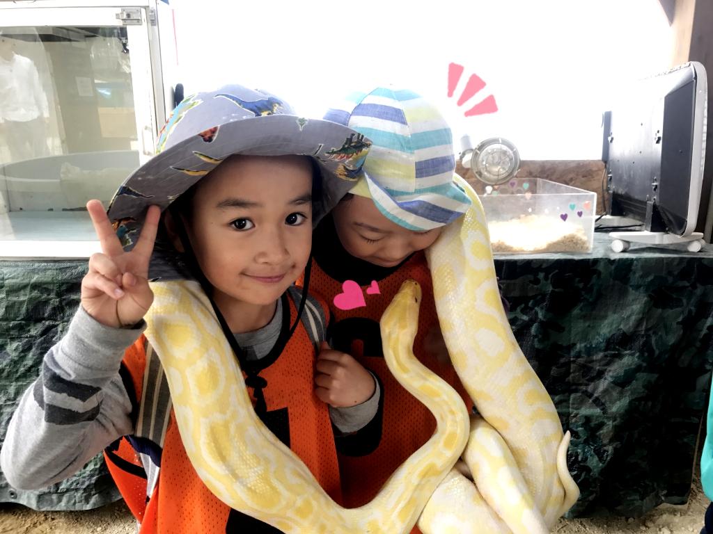 ビルマニシキヘビを巻き巻き( ゚ ω ゚ ) ! おとなしくていい子でした
